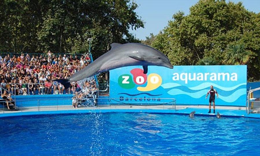 Zoo Barcelona compra entradas zoo barcelona ticketsnet